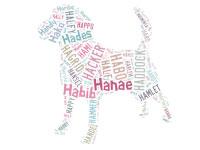 Un nom pour votre chiot : 2012 l'année de la lettre H