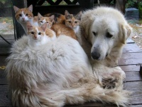Pub chien et chat