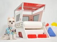 Focus : chien sauveteur en mer