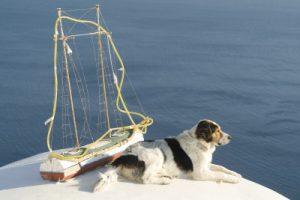chien theme marin blog chien quatre pattes et une truffe