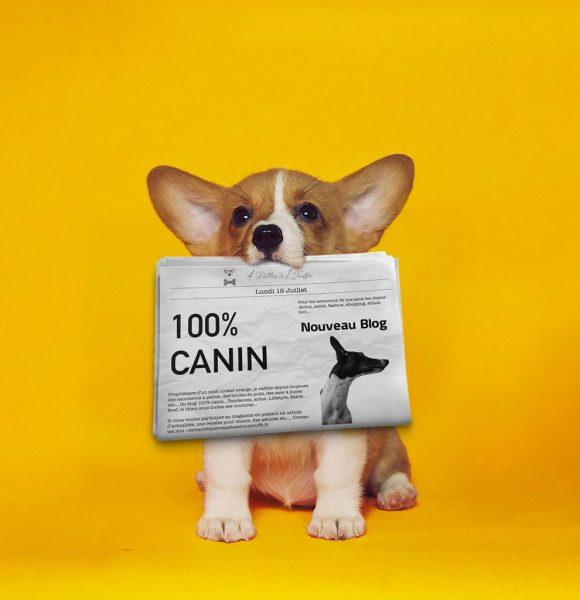 feature news chien quatre pattes et une truffe
