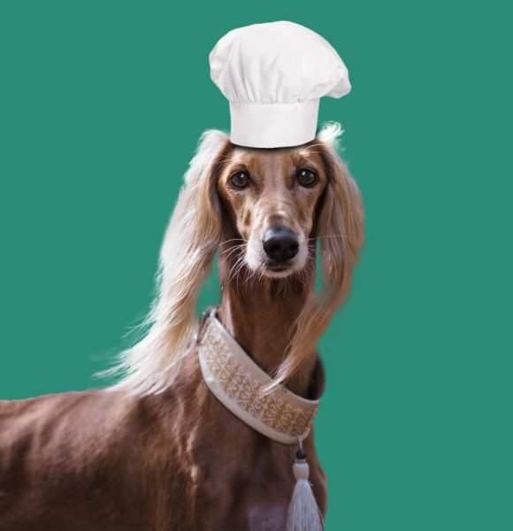 feature recette pour chiens blog quatre pattes et une truffe