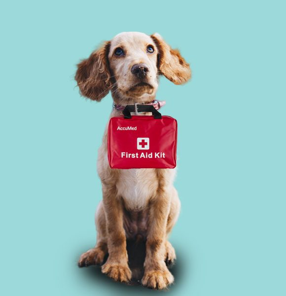 hygiène alimentation et sante pour chiens Quatre pattes et une truffe