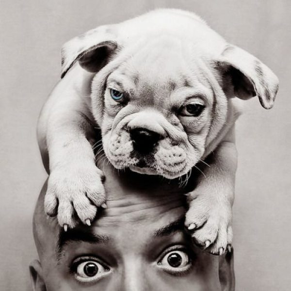 photographie chiot bulldog Eleazar Briceño