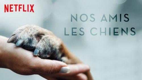 Série documentaire nos amis les chiens sur Netflix Dogs