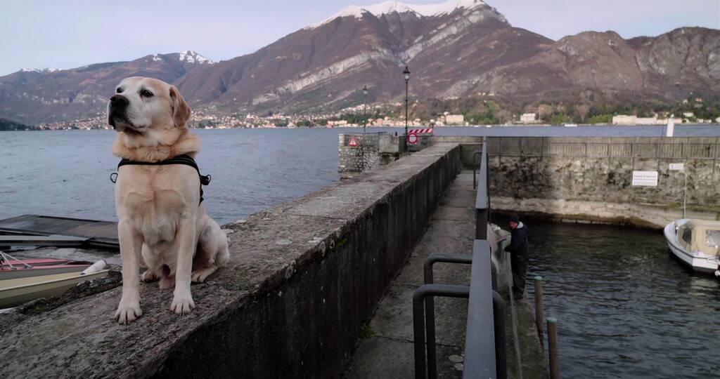 extrait série documentaire chiens sur Netflix